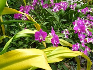 Resituate Singapore Orchid01