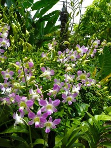 Resituate Singapore Orchid04
