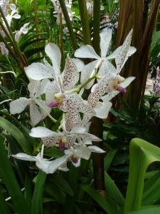 Resituate Singapore Orchid05