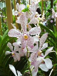 Resituate Singapore Orchid06