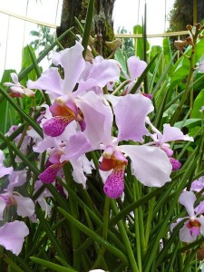 Resituate Singapore Orchid08