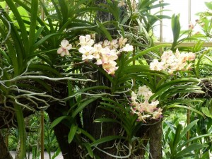 Resituate Singapore Orchid09
