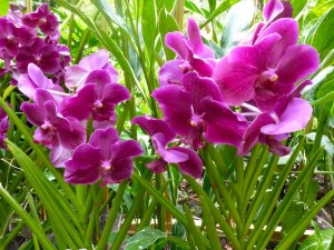 Resituate Singapore Orchid10