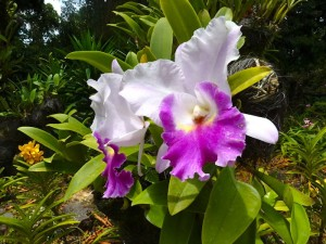 Resituate Singapore Orchid12