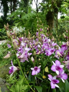 Resituate Singapore Orchid14