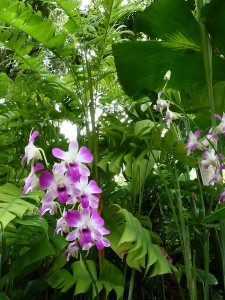 Resituate Singapore Orchid16