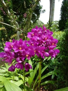 Resituate Singapore Orchid18