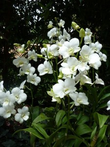 Resituate Singapore Orchid20