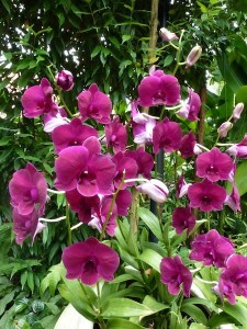 Resituate Singapore Orchid21