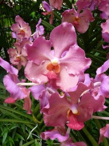 Resituate Singapore Orchid22