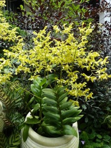 Resituate Singapore Orchid23