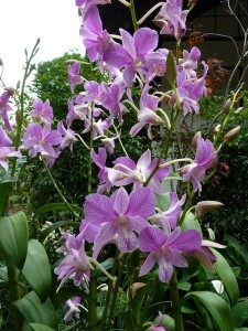 Resituate Singapore Orchid24