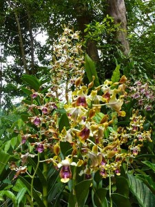 Resituate Singapore Orchid25