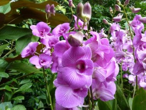 Resituate Singapore Orchid29