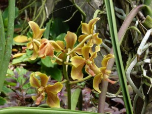 Resituate Singapore Orchid31