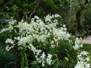 Resituate Singapore Orchid35