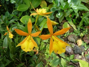Resituate Singapore Orchid38