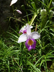 Resituate Singapore Orchid40