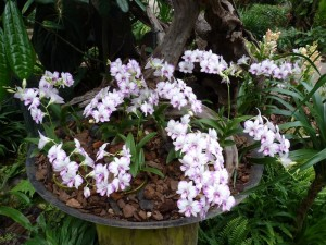 Resituate Singapore Orchid41