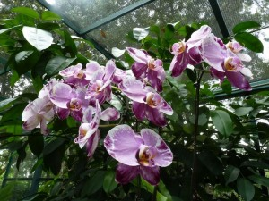 Resituate Singapore Orchid44