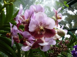 Resituate Singapore Orchid45