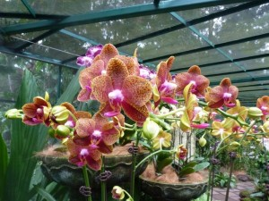 Resituate Singapore Orchid46