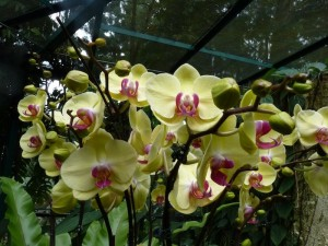 Resituate Singapore Orchid47