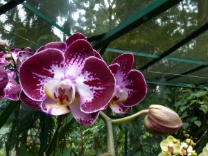 Resituate Singapore Orchid48