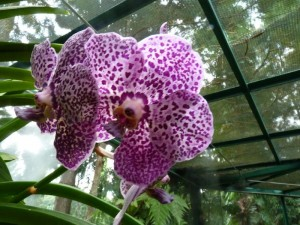 Resituate Singapore Orchid49