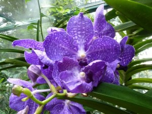 Resituate Singapore Orchid50