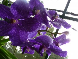 Resituate Singapore Orchid51