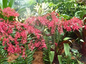 Resituate Singapore Orchid55