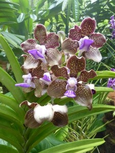 Resituate Singapore Orchid58