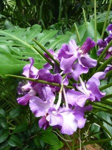 Resituate Singapore Orchid59