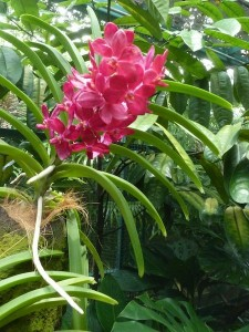 Resituate Singapore Orchid60