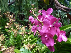 Resituate Singapore Orchid61