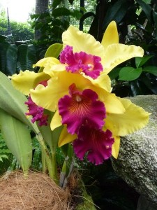 Resituate Singapore Orchid62