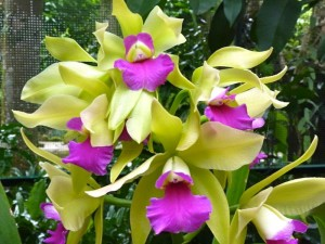 Resituate Singapore Orchid64