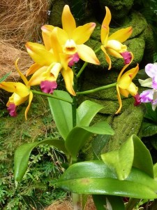 Resituate Singapore Orchid65