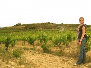 Vineyards, birds and bees in Labastide, La Rioja Alavesa