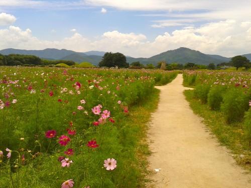Resituate Gyeongju Tumuli Park