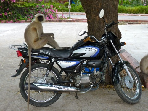 Resituate Motorcycle Monkey