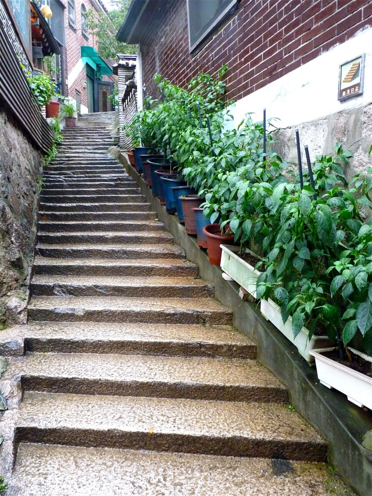 Pepper plants in Bukchon Village in the heart of Seoul
